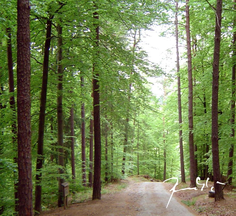 Gorički gozd